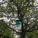 Piège à phéromone carpocapse des pommes, poires et noix