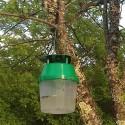 Nématodes contre les mouches du terreau (Sciarides)