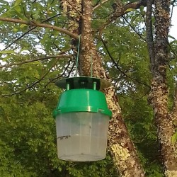 Nématodes Sf anti mouches du terreau (Sciarides)