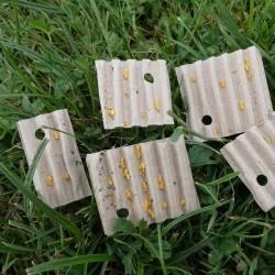 Oeufs de coccinelle migratrice